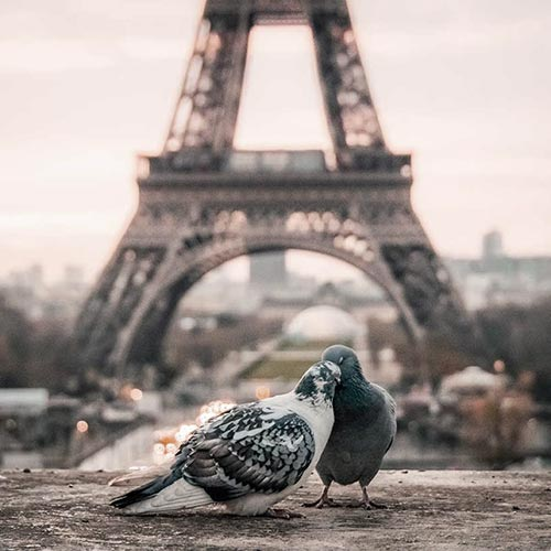 two pigeons with the eiffel tower in the background