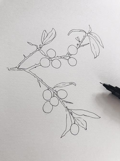 sketch of berries