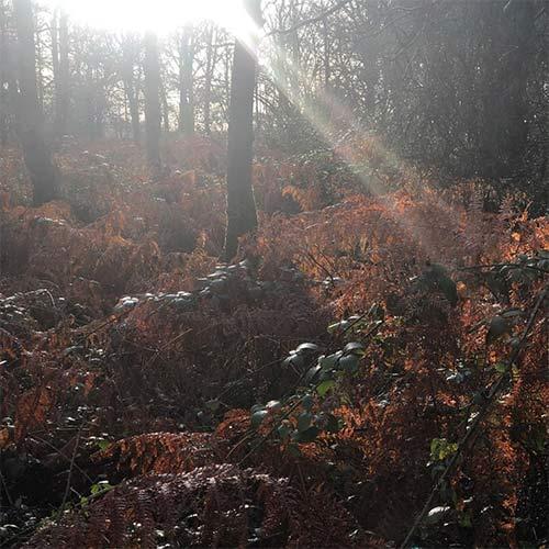 sun through trees in autumn