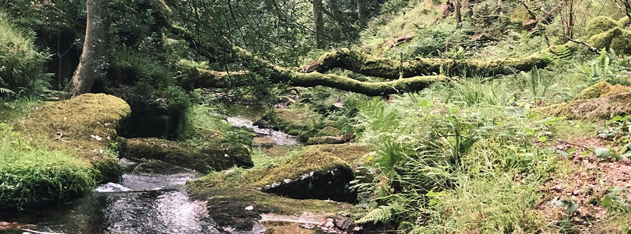 woodland scene - forest bathing