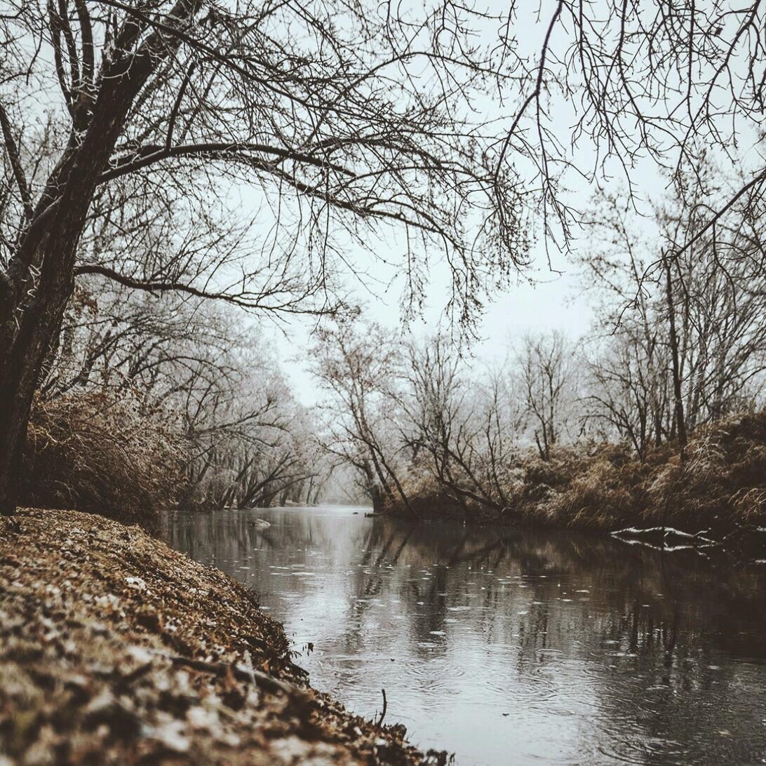 wintery woodland scene