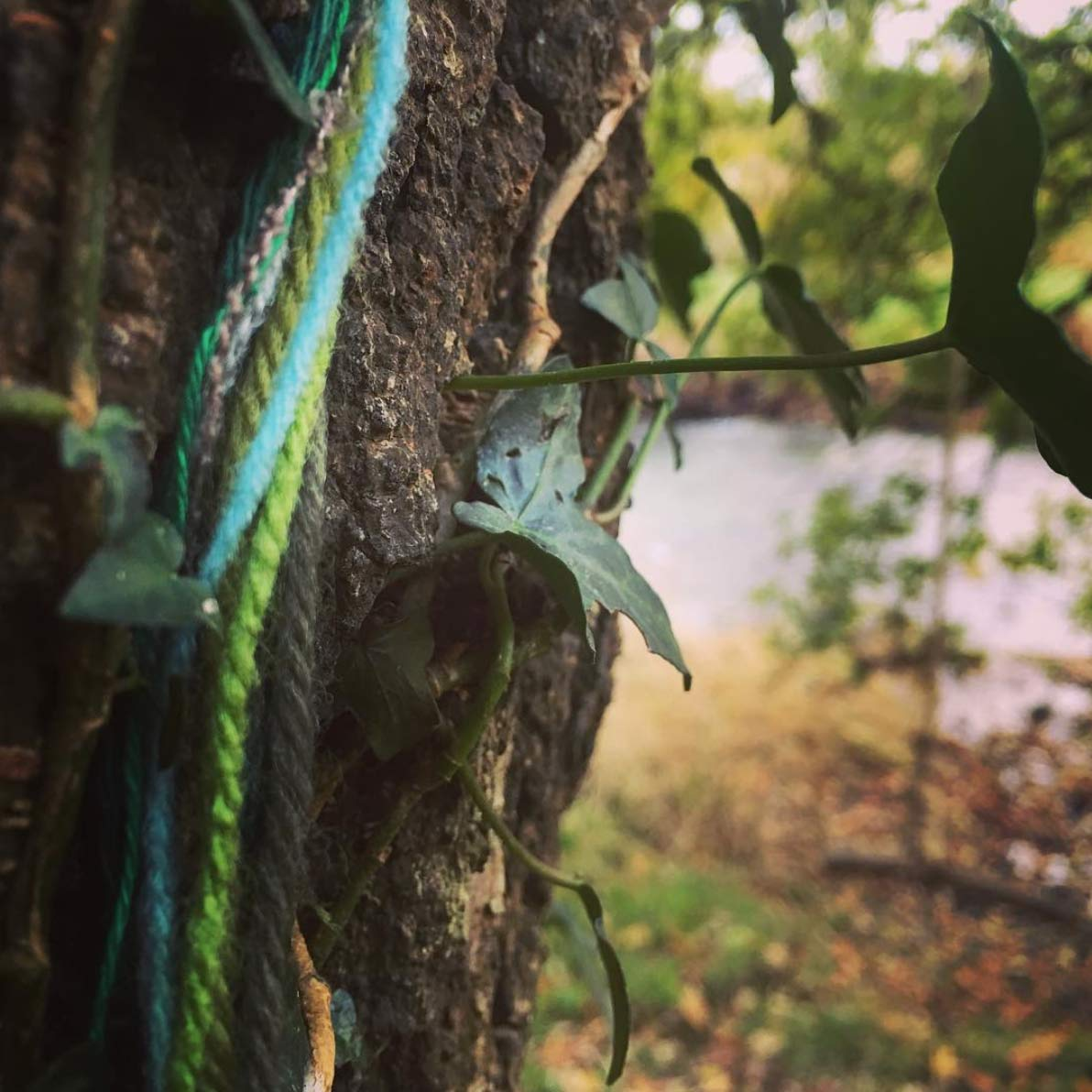 a string of different colours of yarn against a tree