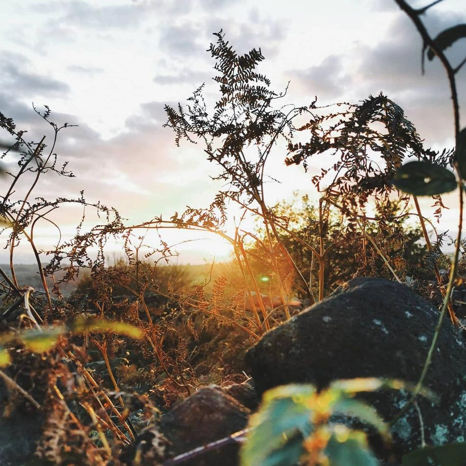 sunset seen from behind plants