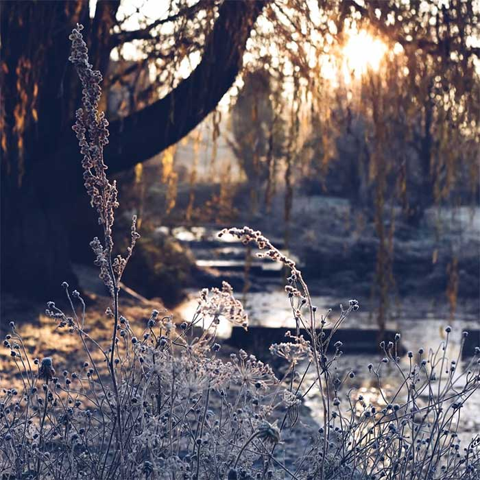 winter scene - body of water with a tree and sun shining