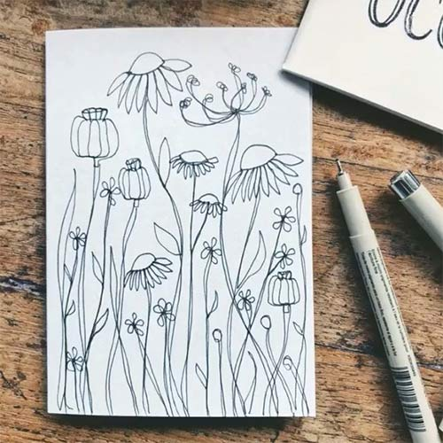 hand drawn illustrations of a poppy field