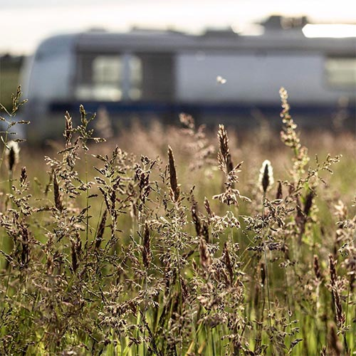 field of grass with a camper in the background that's out of focus