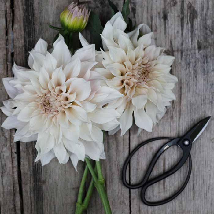 Grace Alexander Flowers