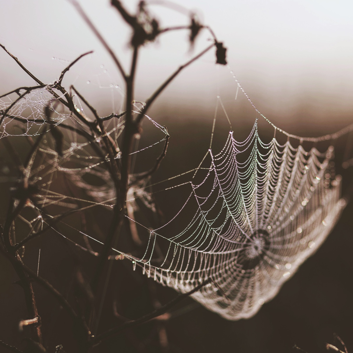close up of a spider web with morning dew on it
