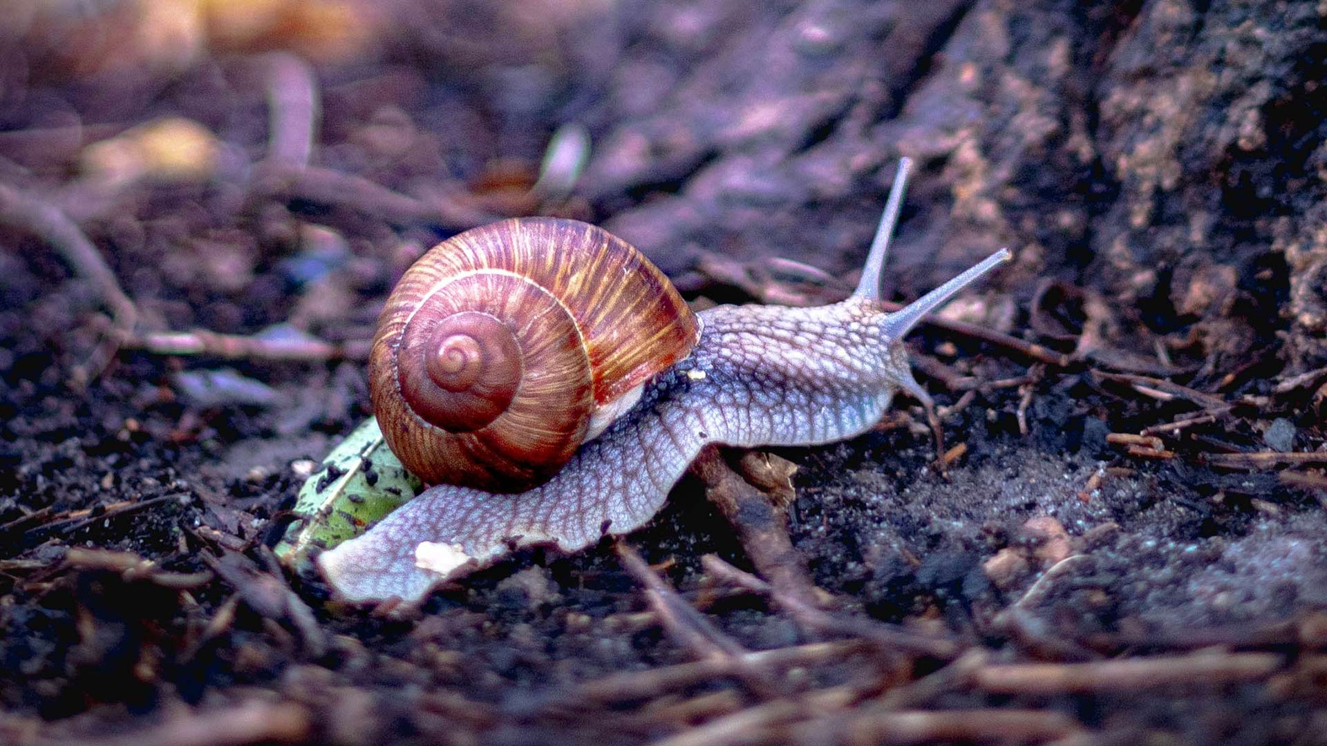 a snail on a tree carrying its shell on its back - snail mail