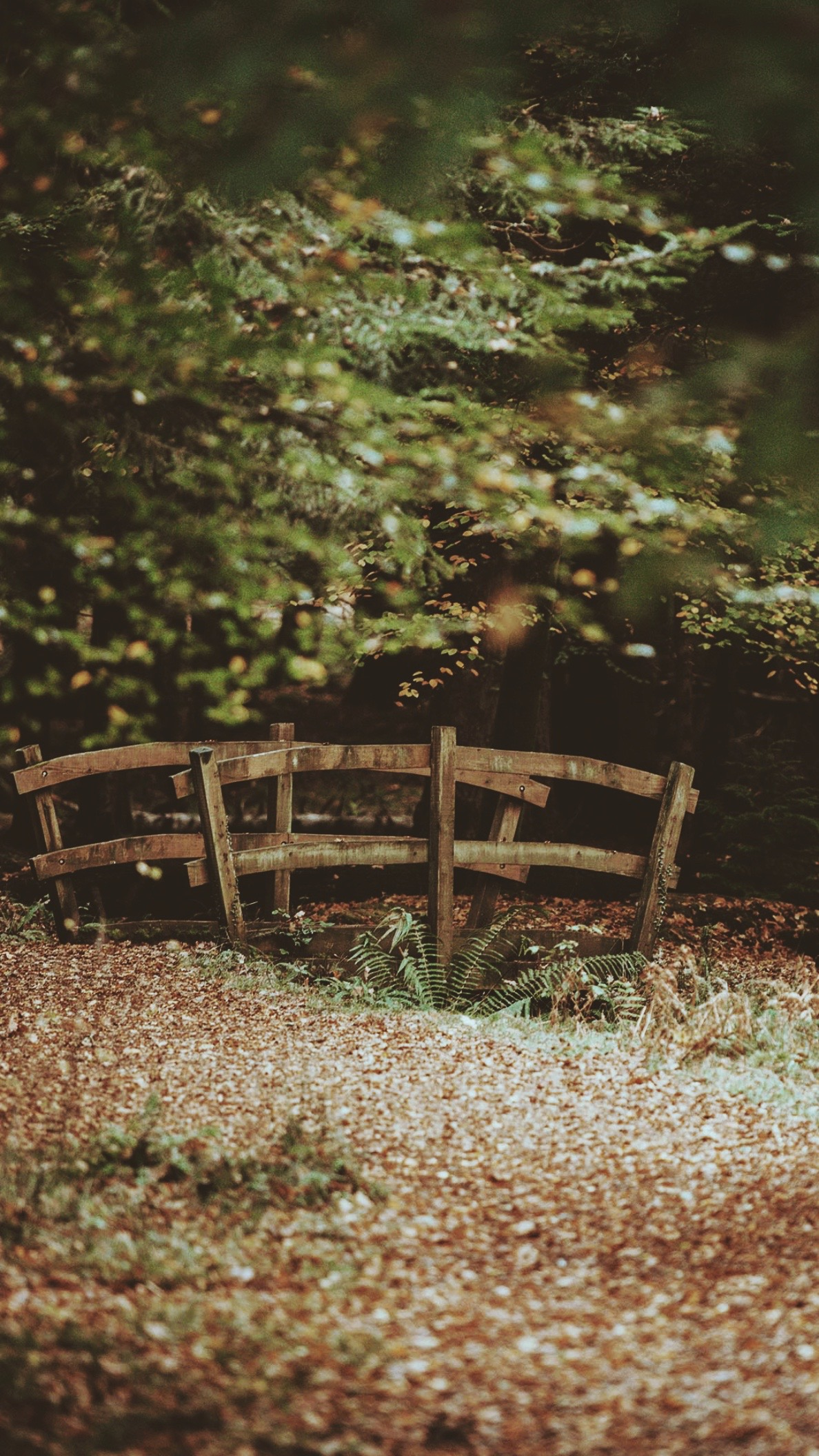 a wooden forest bridge in autumn